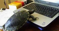 turtle techie